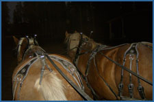 Finishing up an evening sleigh ride in Winter Park, CO