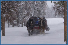 Enjoy a group sleigh ride in the snow in Winter Park, CO