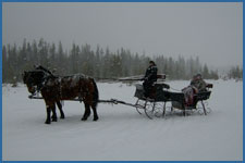 A private sleigh ride enjoys the snow in Winter Park, CO